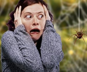 Страшный, очень страшный паук !
